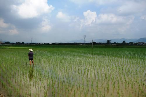 Rice fields outside of Guiyu.