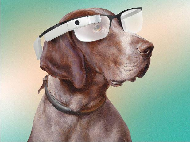 In Pictures: The one place where wearables actually make sense - on animals